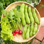 【家庭菜園】夏野菜を定植したよ♪【今日の収穫】そら豆・リーフレタス・ラディッシュ♪|【カメラ女子】Canon EOS 7D Mark II ファームウエア Version 1.0.4にバージョンアップしたよ♪