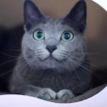 【猫グッズ】大好きな猫じゃらしが買えなくなる・・・? 猫じゃらし DADWAY フロム ザ フィールド フェザーワンド♪