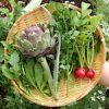 【今日の収穫】旬の野菜 アーティーチョークのスパゲッティ アーリオ・オーリオを作ったよ♪|自分サイズの自給自足生活♪