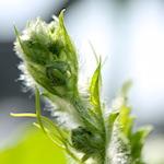 【家庭菜園】緑のカーテン ゴーヤも大きくなってきたよ♪【猫グッズ】猫じゃらし cascione クレイジーゾーンで遊んだよ♪
