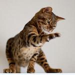【走り猫】家猫の本気力が見たい!!ハンター魂炸裂!!|【自家製モヒート部】ミント酒(STEP2)レモン/ライムの皮を取り除いたよ♪