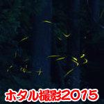 【ホタル撮影】ホタルを撮影しにへ行ってきたよ♪(岐阜県関市 ヒメホタル)