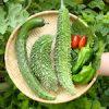 【家庭菜園】キュウリ・ゴーヤ・ピーマン・ミニトマト(スナックサンマルツァーノ)・青しそを収穫したよ〜♪|【猫マジック】マギーりくたん登場!? はい、手品しま〜す♪スパーダーマン&青い炎♪