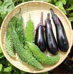 【家庭菜園】夏野菜 ゴーヤ・ナスを収穫したよ♪|【自家製モヒート部】ミント酒(STEP4)ミントの葉をこして取り除いたよ♪