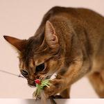 【家庭菜園】台風11号 西日本縦断 台風対策|ちょっとまってちょっとまって猫じゃらしさん!!|TPP交渉 カナダ抜きで妥結か・日本の農業とTPP(19)