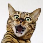 【猫プロレス・猫カンフー】元気ですか!アントニオふうvsキレてないですよ!長州こりく♪|【宙ガール】夏休みの一大イベント!!ペルセウス座流星群を見てきたよ♪