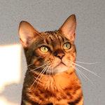 くぅ〜!夕日が目にしみるぜ♪ALWAYS 三丁目 猫が見る夕日
