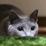【芸達者猫】オカマにワイルド!マトリックスにパッカーン♪猫界の千両役者を目指す♪