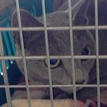 【猫の皮膚病】あおちゃん動物病院へ行く アトピー性皮膚炎・頭頸部掻破|【今日のお月様】スーパームーン(満月)2015年9月28日♪