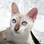 【猫の病気】猫と人の運命 猫伝染性腹膜炎(FIP)と猫コロナウイルス(FCoV)について【家庭菜園】葉物系が発芽しています♪コキアが赤くなりました♪