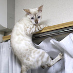 【家族写真】初めて集合写真を撮ったよ〜♪ ふくちゃん!!危機一髪!!|【猫と学ぶ日本の未来】グローバルと今後の日本 診療報酬改定 2016 医師の技術料など日本医師会の「本丸」にまで切り込むか