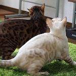 猫もおだてりゃ木に登るぅ〜にゃぁ〜♪ 【猫と学ぶ日本の未来】古い価値観を理解し糧とし、新しい価値観に変えていく