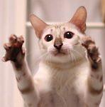 猫じゃらしさ〜ん♪ふくちゃんのところにきてくださ〜い♪やぁ!!|【猫と学ぶ日本の未来】「所有」から「シェア」へ信頼関係を築くことにより消費税35%も視野に入れ大増税時代を乗り越える方法を考えてみよう