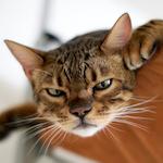 今日もりくたんハッスル♪ハッスル♪|【猫と考える日本の未来】次の時代は「デジタル」から「アナログ」へ