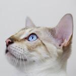 にゃぉ〜ん♪だいちゃん猫じゃらし独り占めで大興奮♪|【猫と考える日本の未来】懐かしい焼きそばの思い出と軽減税率