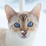 スノーベンガルのだいちゃん・ふくちゃん♪生まれて初めて雪を見たよ♪