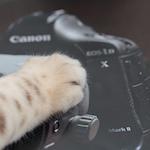 【カメラ女子】Canon EOS-1D X Mark II を購入して1週間使ってみたよ♪(追記)|【ベンガル】くうちゃんは諦めない!