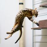 寒さなんてなんのその〜♪今日のジャンプもキマった♪|【猫との暮らし】猫のエネルギー発散と猫の爪