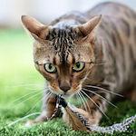 チームジャガー!? 飛びます♪飛びます♪|【猫の行動】孤独なハンター