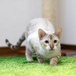 わんにゃんドーム2016 わんにゃんフォトコンテスト 写真を展示してもらえることになりました♪|【猫の行動】猫は順応性や適応性に優れています