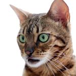 【膝蓋骨脱臼】猫の膝蓋骨外方脱臼 治療プログラム|くうちゃん帰宅♪