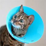 【膝蓋骨脱臼】猫の膝蓋骨外方脱臼 治療プログラム|術後3日目 くうちゃん退院したよ♪