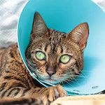 【膝蓋骨脱臼】猫の膝蓋骨外方脱臼 治療プログラム|術後5日目|春ですね ぽかぽか~ くうちゃん日向ぼっこしたよ♪