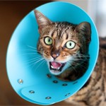 【膝蓋骨脱臼】猫の膝蓋骨外方脱臼 治療プログラム|術後6日目|くうちゃん階段が登れるようになったよ♪