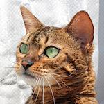 【膝蓋骨脱臼】猫の膝蓋骨外方脱臼 治療プログラム|術後10日目|抜糸・スーパーライザー・Hyper5000A2Jによる(光線照射療法)治療を受けてきたよ♪