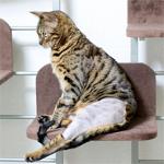【膝蓋骨脱臼】猫の膝蓋骨外方脱臼 治療プログラム|リハビリ|スーパーライザー・Hyper5000A2Jによる(光線照射療法)治療を受けてきたよ♪|【家庭菜園】今日の収穫♪アスパラガス・ニンジン・ツタンカーメンを収穫したよ♪