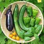 【キャットフード】4Dミートの危険性とフードの選び方について考えてみる【家庭菜園】ナス・キュウリ・ピーマン・ミニトマト・バジルを収穫したよ♪
