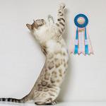 【TICA Cat Show】だいちゃん キャットショーに参加したよ♪ TICA&ECC(ENJOY CAT CLUB) 124ー127th CAT SHOW