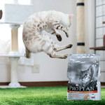 【Instagram】IgersJP×「ピュリナ プロプラン」 栄養設計がグレードアップしたピュリナ最高峰のプレミアムニュートリションフードのアンバサダーに就任したよ♪