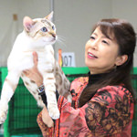 【TICA Cat Show】だいちゃん キャットショーに参加したよ♪ TICA&BCF(Brilliant Cat Fanciers) 41st-42nd Halloween Cat Show