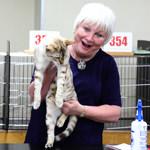 【TICA Cat Show】だいちゃん キャットショーに参加したよ♪ TICA&TCC(Tokyo Cat Club)86th-87th Cat Show