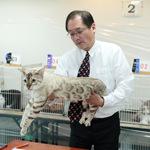 【TICA Cat Show】だいちゃん キャットショーに参加したよ♪ TICA&ECC(ENJOY CAT CLUB)128th-131st Cat Show