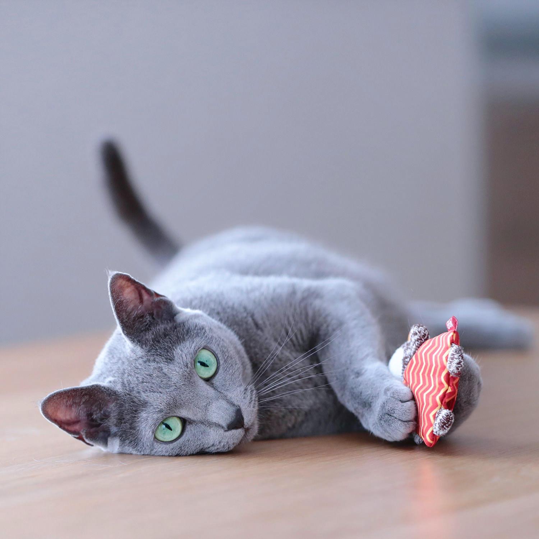 猫と一緒にグリーンライフ