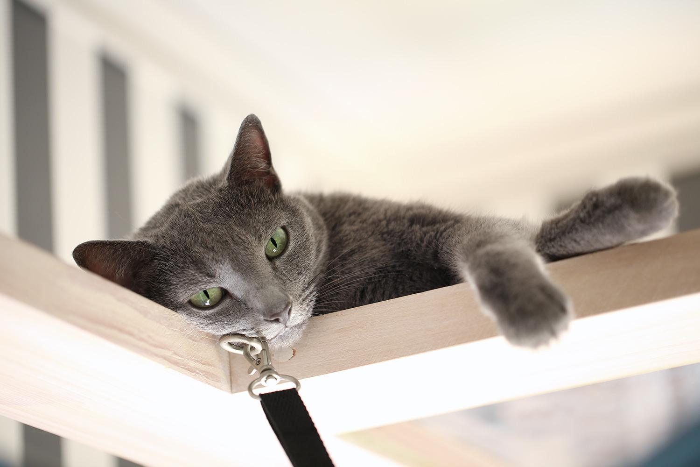 猫と一緒にグリーンライフ ロシアンブルー