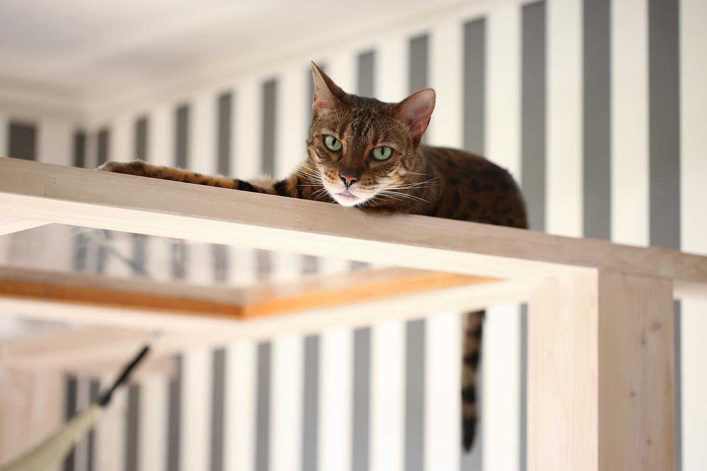 猫と一緒にグリーンライフ ベンガル
