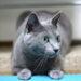 猫もダイエットということで・・・ NRF イージー ドゥ ニャン!?|日本の医療とTPP(51)