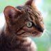 猫ちゃんの月曜日・りくたんの怪談!?|【家庭菜園】緑のカーテン・ズッキーニを定植したよ♪