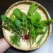 【家庭菜園】今日の収穫♪|あおちゃんのアレルギー皮膚炎